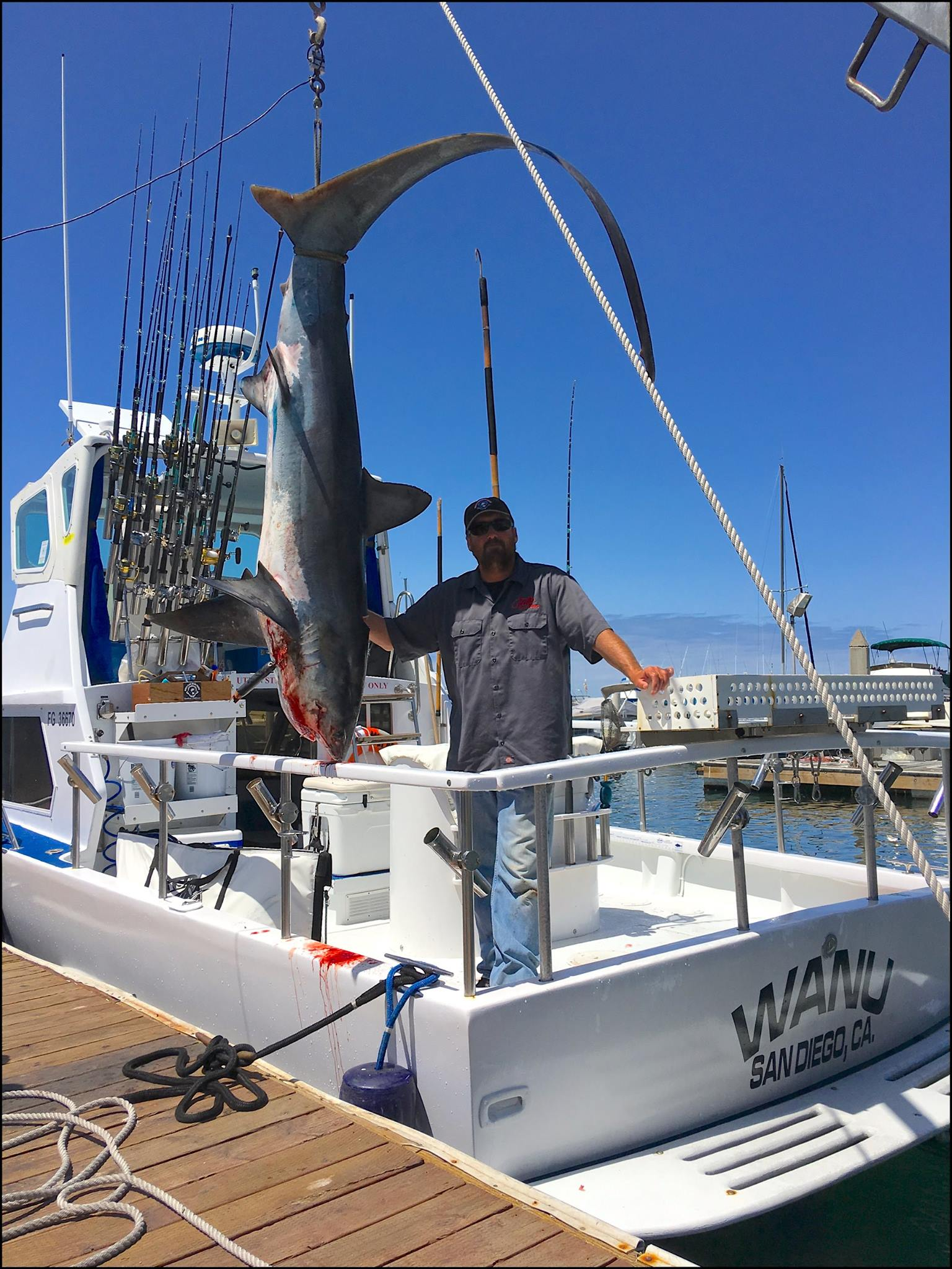 2 thresher sharks in 1 day san diego fishing charters