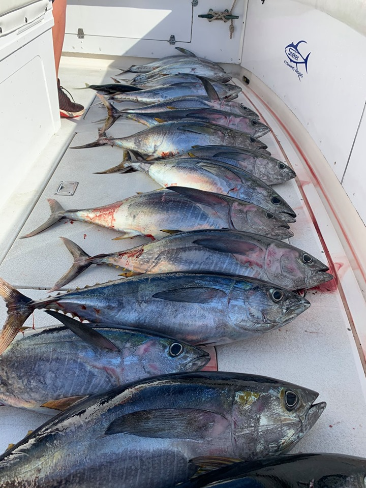 Yellowfin fish